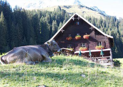 schoen-aussichten-kontakt-daten-die-bodenalpe-gasthaus-in-warth-lech-am-arlberg